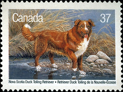 Nova Scotia Duck Tolling Retriever Postzegel